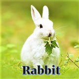 Rabbit - Good Luck Symbol - Sterling Luck