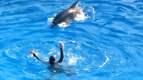 Dolphin rescues girl