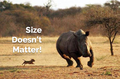 Does Size Matter? Not When You're Selling Online with Attik Designs & Shopify