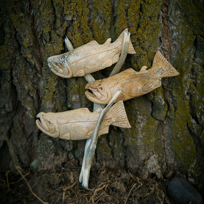 Salmon School on Driftwood
