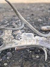 Moose Shed Carving