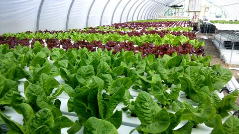One of our farm's systems growing different varieties of lettuce