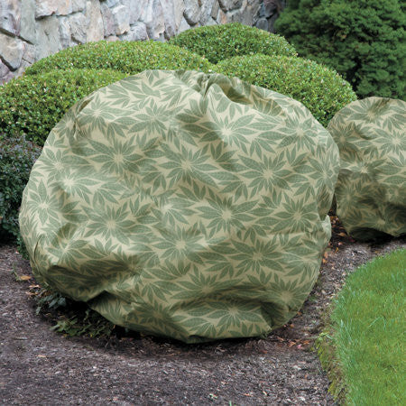 Shrub Jacket