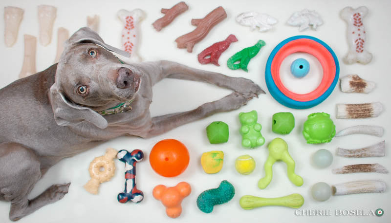 A Few of My Favorite Things Weim Greeting Card - Blank