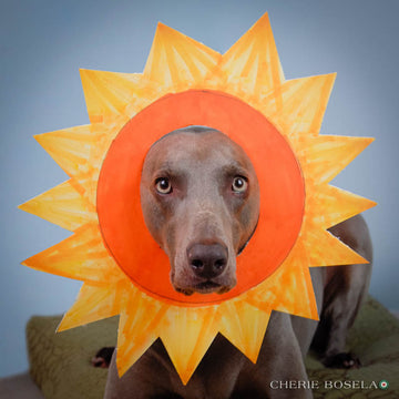 Weimaraner You are my Sunshine Greeting Card - Blank