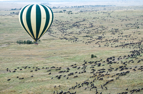 Hot air balloon floats above a heard of wildebeests - photo by Jason Hafso