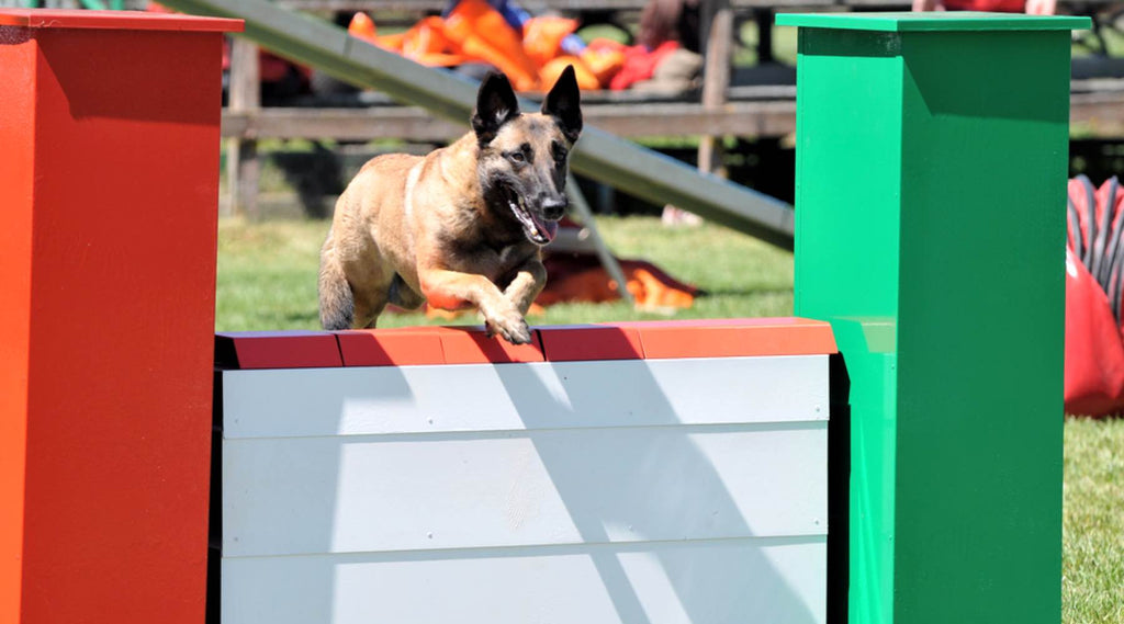 agility obstacle le mur