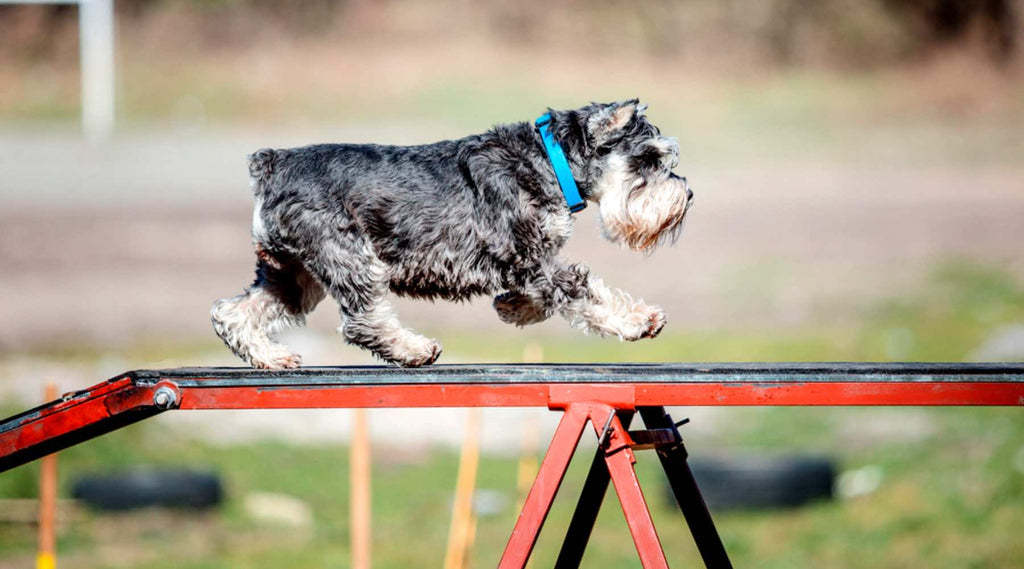 agility obstacle passerelle