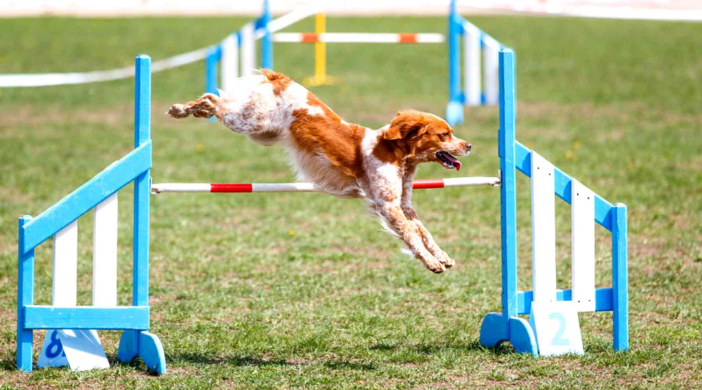 agility obstacle saut haie simple