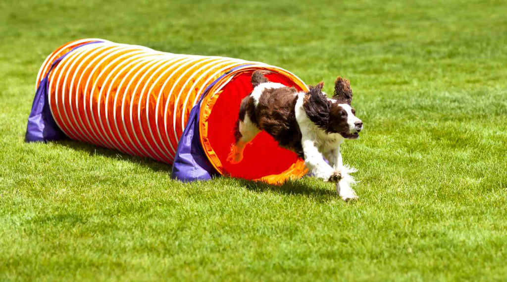 agility obstacle tunnel souple
