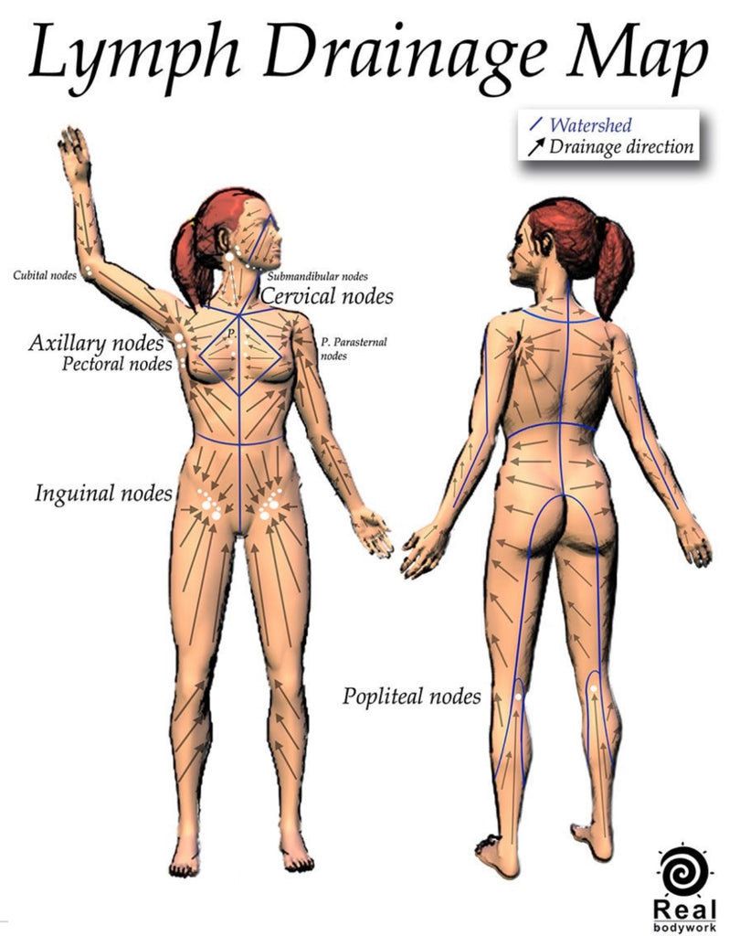 Lymphatic Drainage Map of how it drains around the body.