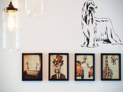 Afghan Hound Die Cut Vinyl Wall Decal (Removable Sticker) - Fusion Decals