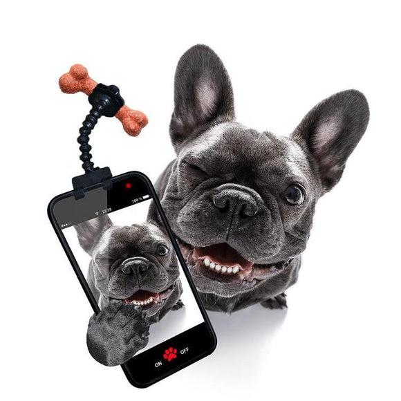 Pet Selfie Stick Holding Treats for Dog & Cat Photos
