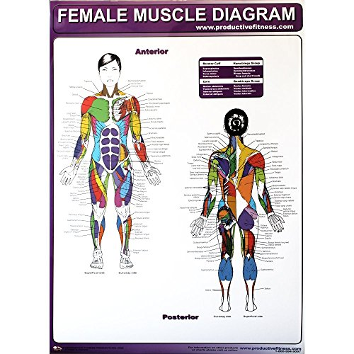 Productive Fitness Poster Series Female Muscle Diagrams (Laminated)