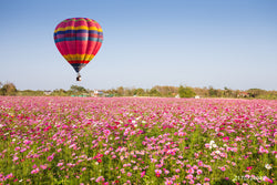 LIFE MAGIC BOX Vinyl Hot Air Balloon Cheap Photography Backdrops Pink Flower Backgrounds
