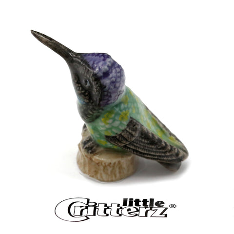 "Hummingbird - Porcelain Magnificent Hummingbird figurine - ""Eugene"""