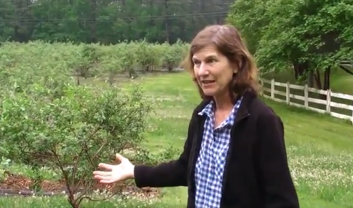 Interview with Herndon Hills Farm: Weed Control on Pick-Your-Own Blueberry Crops