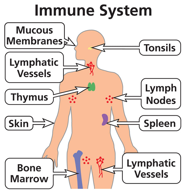 CBD and Immune Health