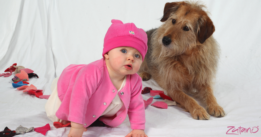 Tips on introducing your new baby to a family pet