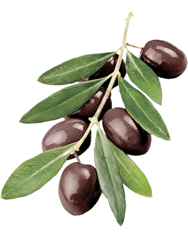 Why Send an Olive Branch?