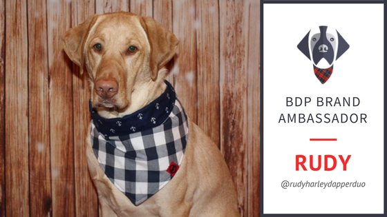 Meet Rudy - Big Dog Plaid Brand Ambassador