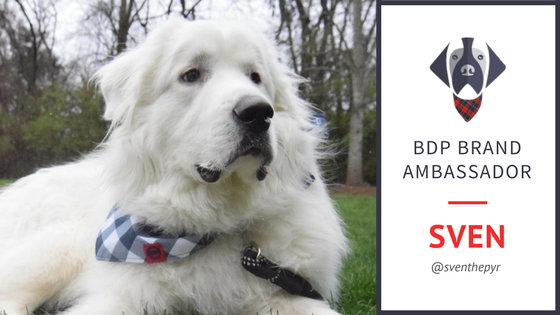Meet Sven - Big Dog Plaid Brand Ambassador