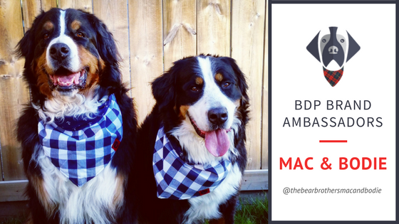 Big Dog Plaid Brand Ambassadors - MAC & Bodie