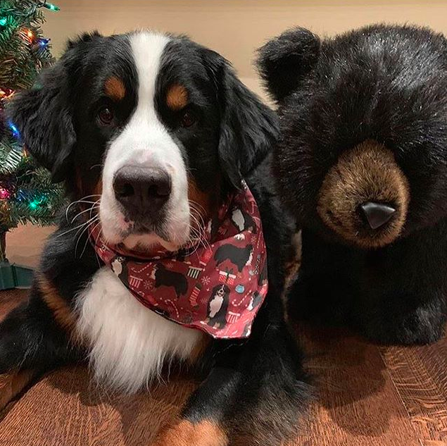 A Very Bear-y Christmas Holiday Bandana - Ruby & Black Tartan Plaid