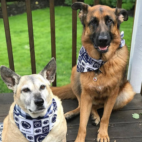 Custom Big Dog Bandana