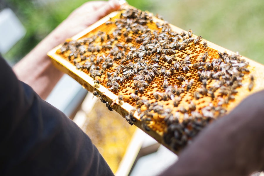 A Gift That Keeps on Giving: Adopt a Bee Hive
