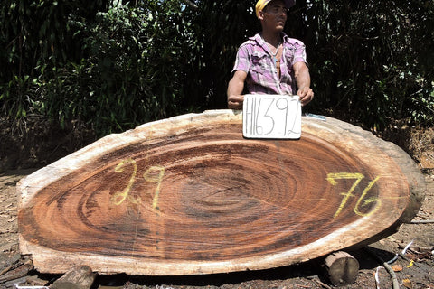 Parota/Guanacaste 76x29x3 Cross Cut Slab (H16392)