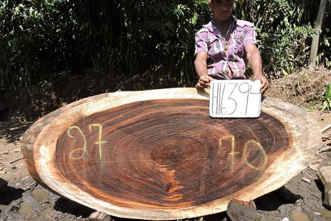 Parota/Guanacaste 70x27x3 Cross Cut Slab (H16394)