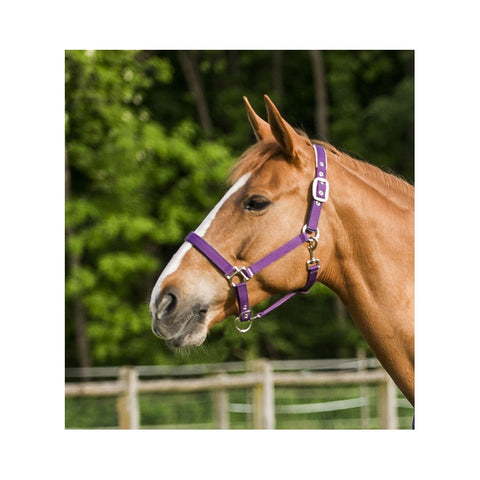 EquiTheme Stripe Fleece Lined Headcollar 5 Colours!!