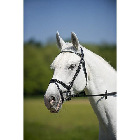 Norton Brilliant Fin Flash Bridle