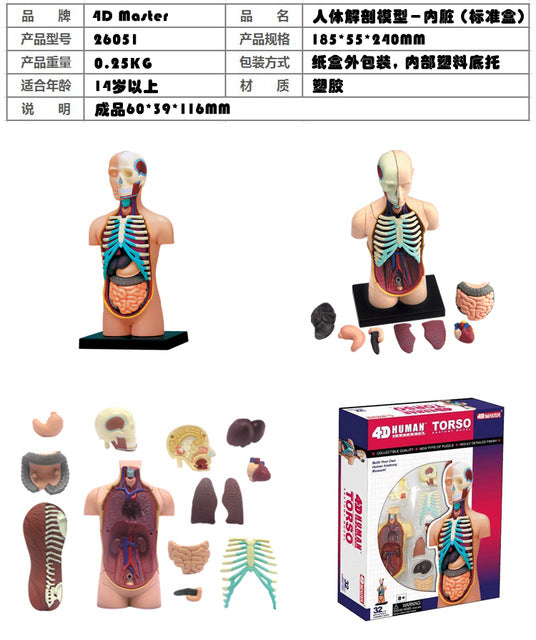 Human Body Anatomy Model and Puzzle Medical Science Toy – Sciencesy