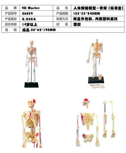 Human Body Anatomy Model and Puzzle Medical Science Toy