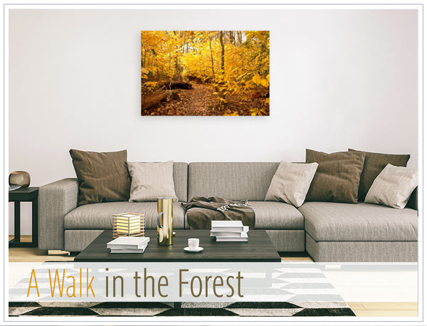 """A Walk in the Forest"" Original photo on Canvas"