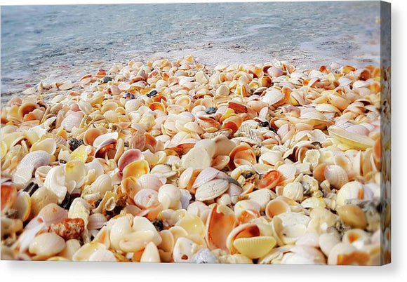 Shell Yeah - Canvas Print