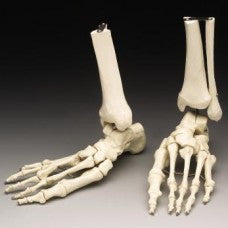 Skeletal Foot Model Tool