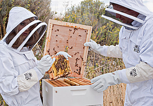 harvest lane honey bee live bees beekeeping supplies