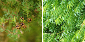 Tea Tree oil benefits for skin, Neem oil benefits for skin, Acne Face Wash, Oily Skin, Clear Skin
