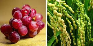Grape seed oil benefits for skin, Rice bran oil benefits for skin, Acne Face Wash, Oily Skin, Clear Skin
