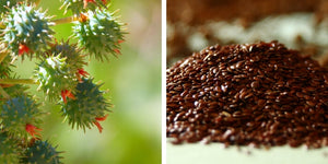 Castor Oil benefits for skin, Flaxseed Oil benefits skin, Acne Face Wash, Oily Skin, Clear Skin