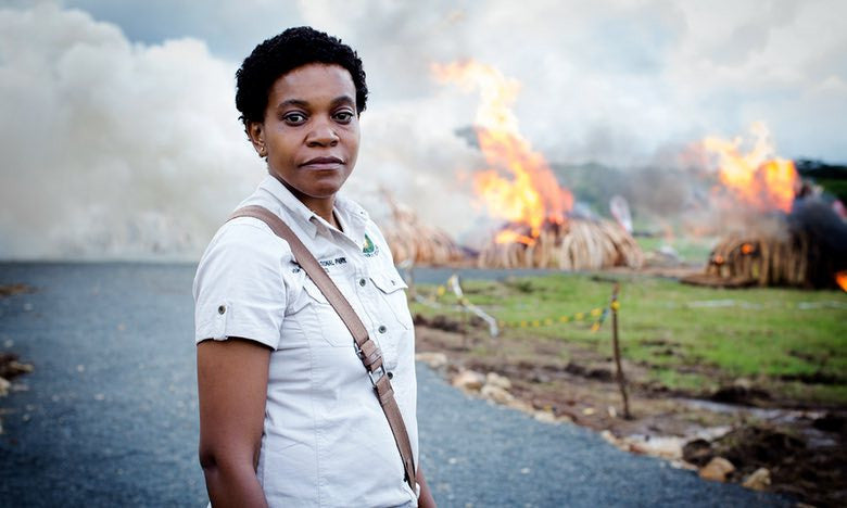 The woman risking her life to save Africa's elephants