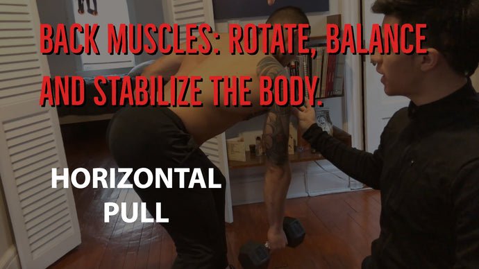 BACK MUSCLES: Rotate balance and stabilize the body