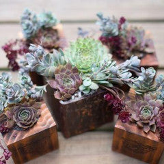 Wood And Metal Succulent Wedding Gift