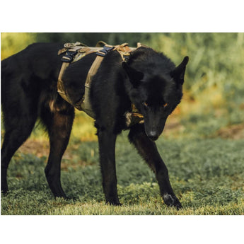 Eagle Industries Canine Adjustable Harness Lifestyle 1 - HCC Tactical