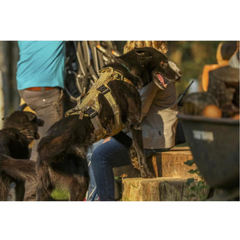 Eagle Industries Canine Adjustable Harness Lifestyle 2 - HCC Tactical