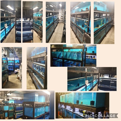 Vegas Valley Cichlids Fish Room