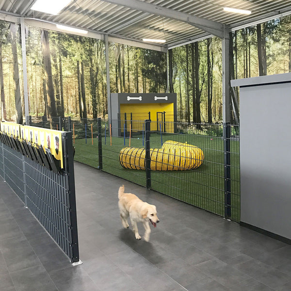 Indoor Auslauf im BELLOMANIA Dog Resort